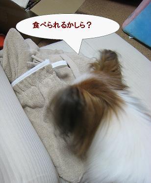 nitori2.jpg