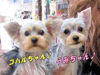 うみちゃん&コハル