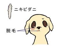 まめちしき(毛包虫)