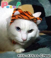 トラさん帽子