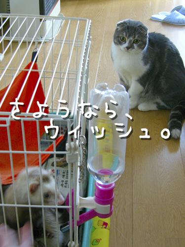 20090811_a