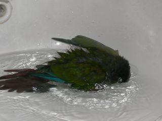 ペコ水浴び3