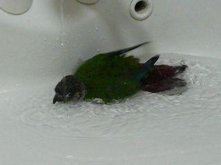 ペコ水浴び1