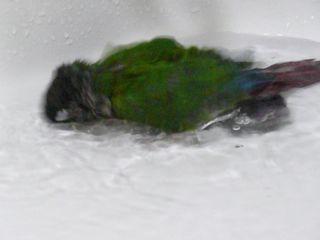 ペコ水浴び2