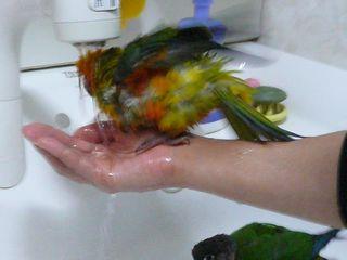 ピコ水浴び2