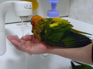 ピコ水浴び1