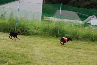 大型犬用ラン