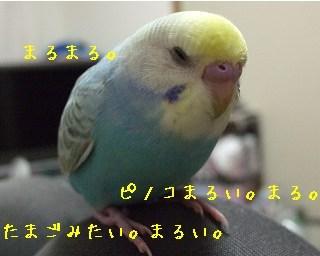 pino10-1