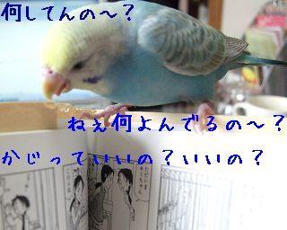 ぴっぴら張2