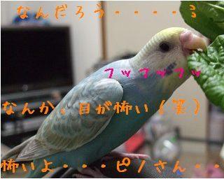 ぴの小松菜