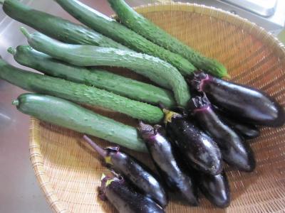 110702夏野菜6