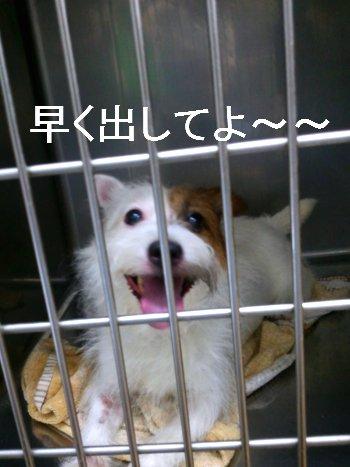 2011-07-14_11_15_51.jpg