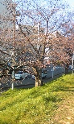 2011-4-1-SAKURA.jpg