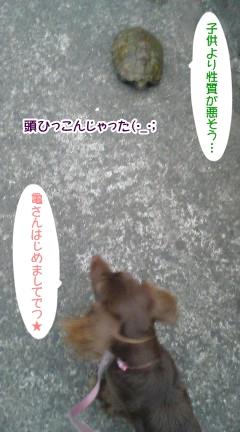 20091102_2.jpg