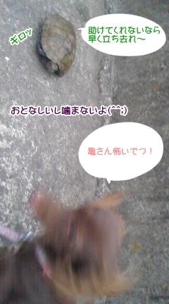 20091102_3.jpg
