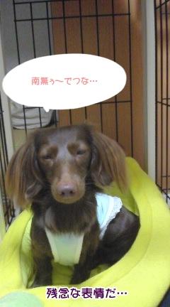 20091106_03.jpg