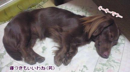 20091110_02.jpg