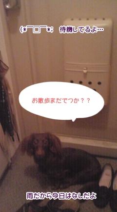 20091111_1.jpg