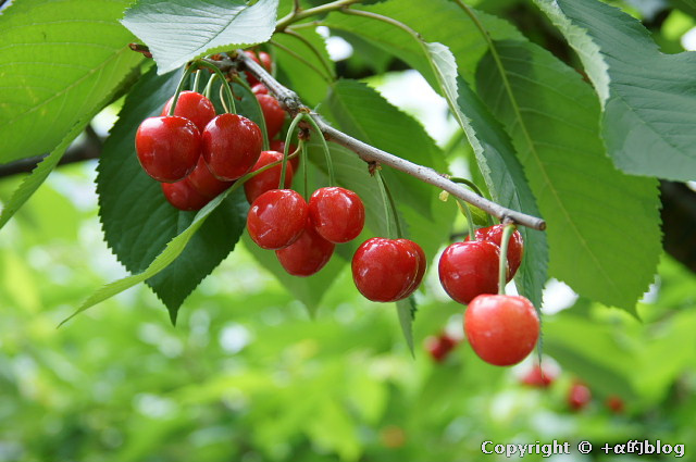 cherry1106e_eip.jpg