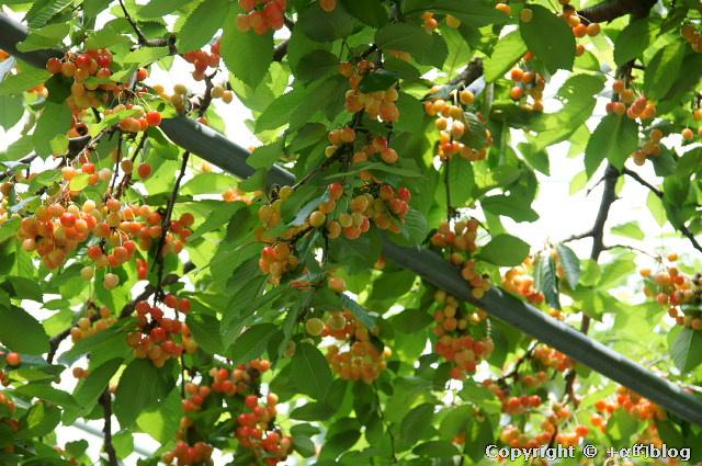 cherry1106i_eip.jpg
