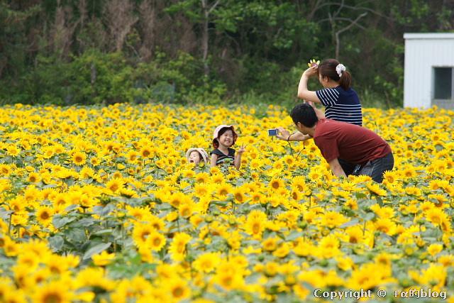 himawari1107ee_eip.jpg