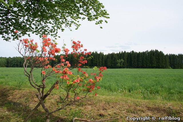 shichi1105J_eip.jpg