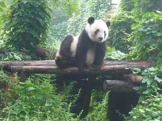 北京動物園3