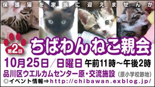 nekooyakai20091025_320x180.jpg