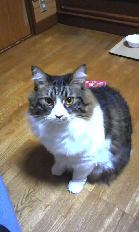 ぼくの愛猫