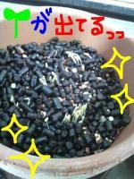 d5f8cc_20100527105544.jpg