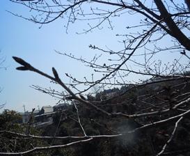 20110331_22.jpg