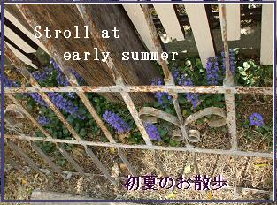 初夏のおさんぽ