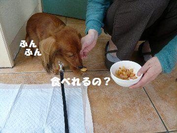 P1340071.jpg