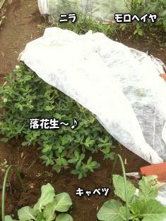秋畑1image