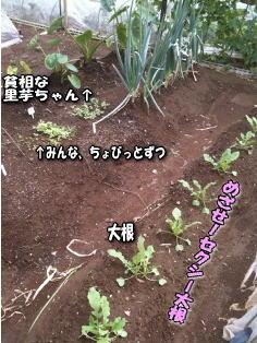 秋畑image