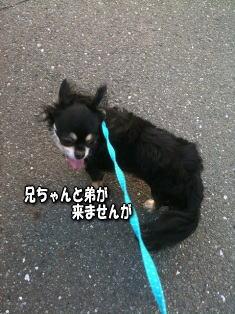 さんぽ2image