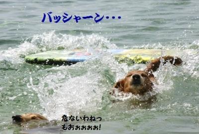 IMG_0050 - コピー