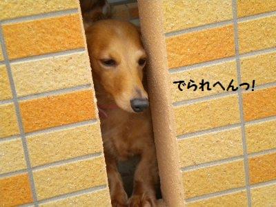 DSCN0043_20110115151105.jpg