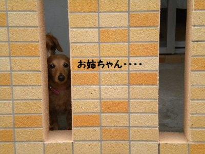 DSCN0050_20110115151104.jpg