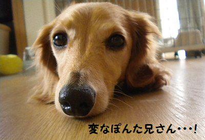 DSCN4801_20100916175111.jpg