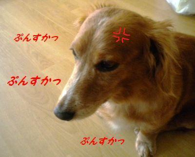 DSCN5489.jpg
