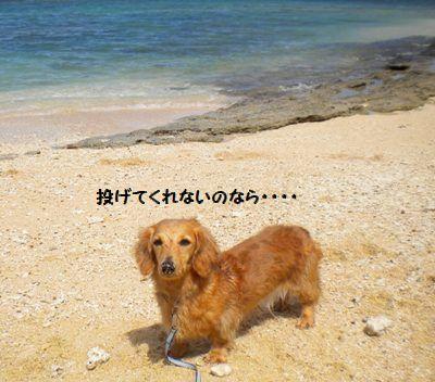 DSCN5718_20111004180136.jpg