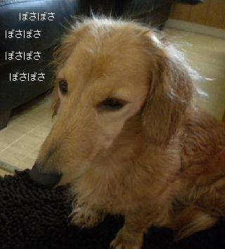 DSCN5793.jpg