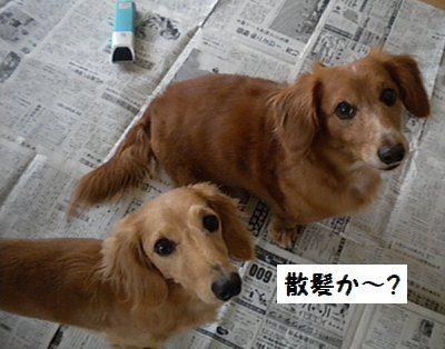 DSCN6320_20101019143134.jpg