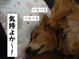DSCN6797.jpg