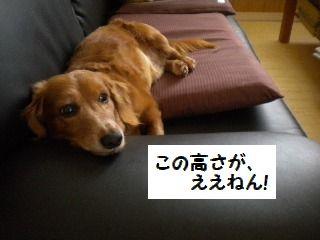 DSCN6904.jpg