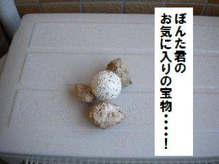 DSCN7462.jpg
