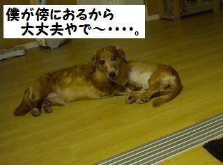 DSCN7980_20100516180238.jpg