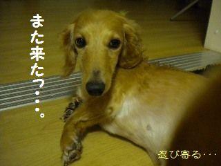 DSCN7986.jpg