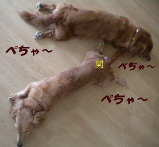 DSCN8057_20100609161012.jpg